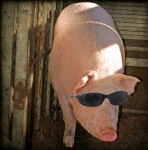 Blind Pig