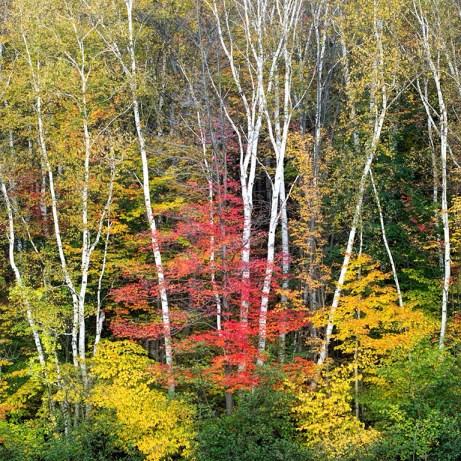 20131001_New Hampshire_0940square