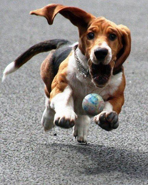 chasing-ball