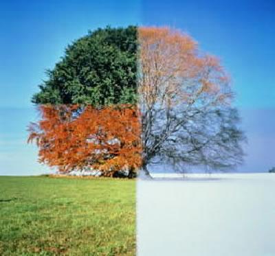 seasons Of Life Large