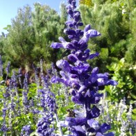 gear-flowers
