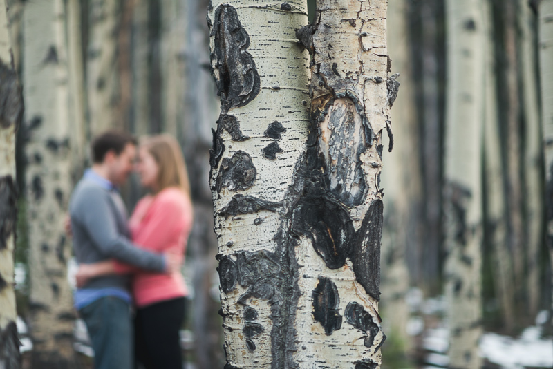 Evergreen Engagement Photos aspen tree