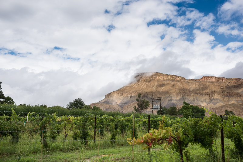 Palisade Wedding Photography vineyard