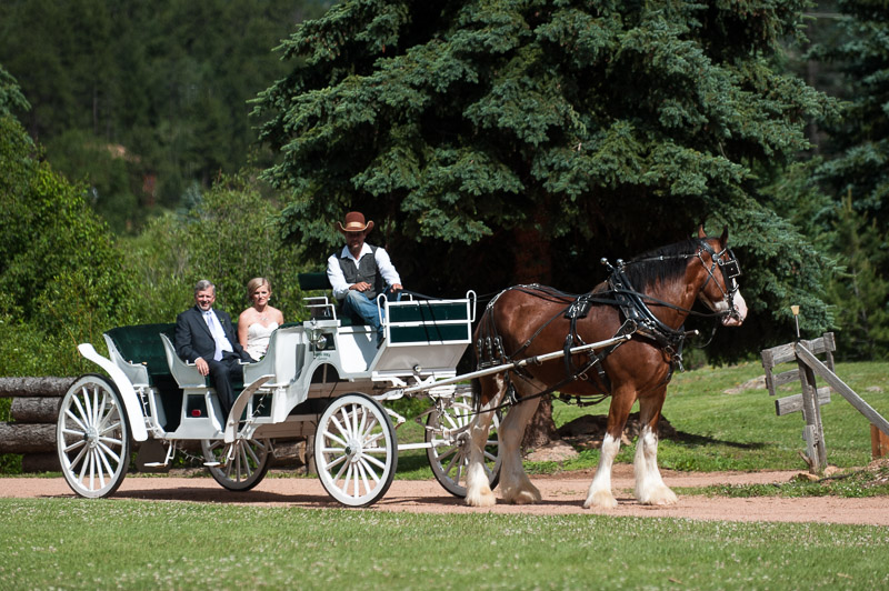 Emily and Ryan Lower Lake Ranch Wedding Photography clydesdale