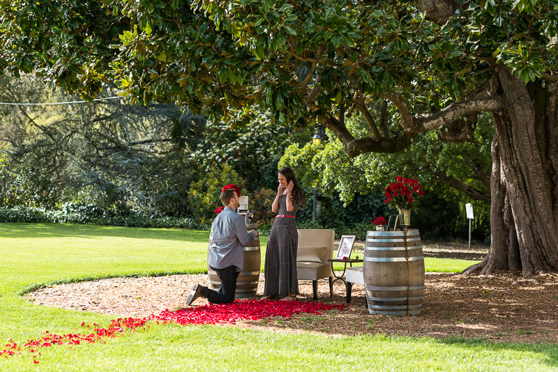 Sonoma Chateau St Jean Vineyard proposal