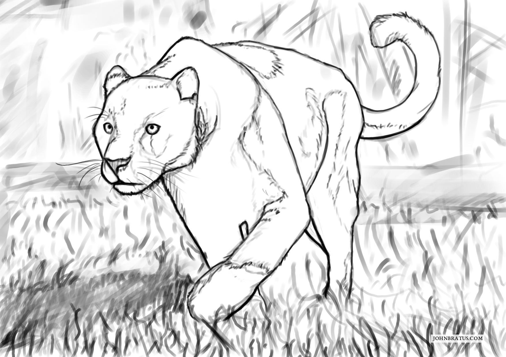 Digital sketch of a wandering black panther