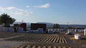 Coffee raked onto Drying Beds - John Burton Ltd NZ
