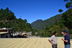 Guatemala Coffee Farm and Landscape - John Burton Ltd NZ