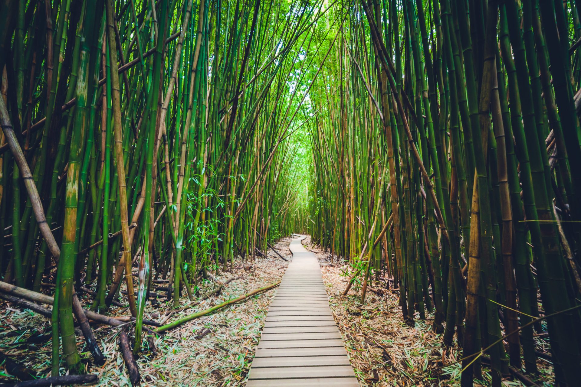 A path under the bamboo forest in Maui