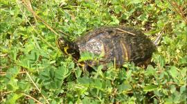Turtle Upright snapshot