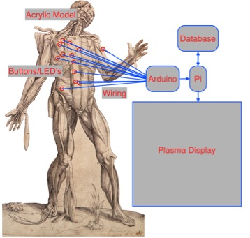Vesalius Mulligan Diagram