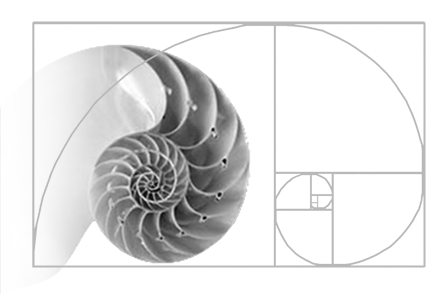 Golden Rectangle of Shell