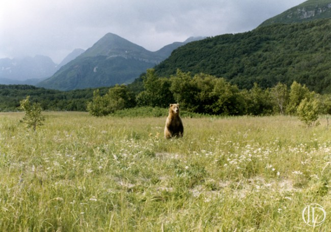 Grizzly - $1200 - 11x17 Kodachrome Color C Print in 18x24 frame - Edition of 10