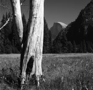 9-1999 Yosemite Valley-Hasselblad-80 Planar-G filter-T-max 100 film-PMK Pyro developer.