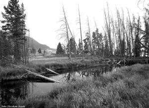 8-1988 Yellowstone National Park-Linhof Technika V 4x5 camera-120mm Schneider Symmar S lens-Kodak Tmax 100 4x5 film-Kodak HC110B developer.