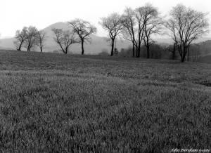 5-1-1983 Morning dew on wheat field-Pennsylvania-Cambo 4x5 view camera-300mm Schneider Xenar lens-K2 filter-Kodak Tri X Pan Pro 4x5 film-Kodak HC110B developer.