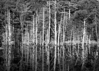 9-8-1986 Near Christmas Cove Maine-Toyo 8x10M camera-300mm Schenieder Xenar lens-K2 filter-Kodak Tri X Pan Professional 8x10 film-Kodak HC110B developer.