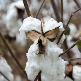 Weathered, Cotton, by John Dowell artist photographer