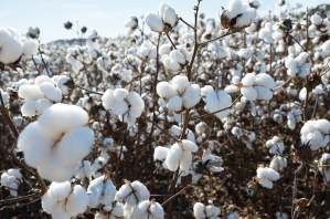 Lost, Cotton, by John Dowell artist photographer