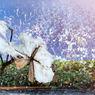 Angels Are Coming, Cotton, by John Dowell artist photographer