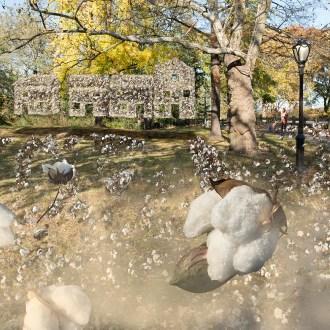 Williams and Neighbors of Seneca Village, Cotton, by John Dowell artist photographer