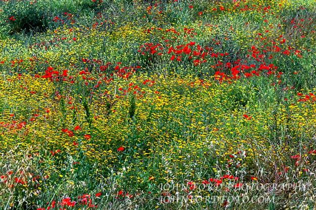 WILDFLOWERS,ITALY
