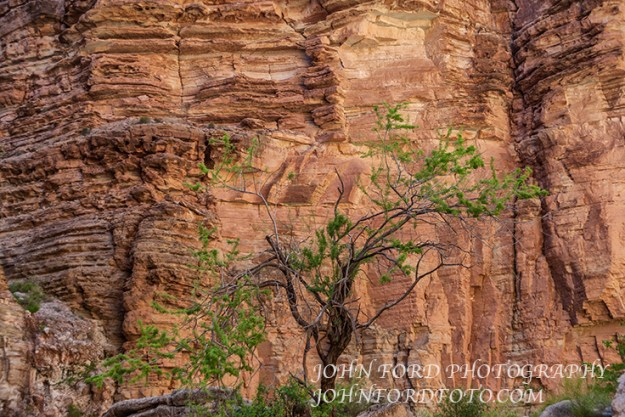 MATKAT TREE, GRAND CANYON