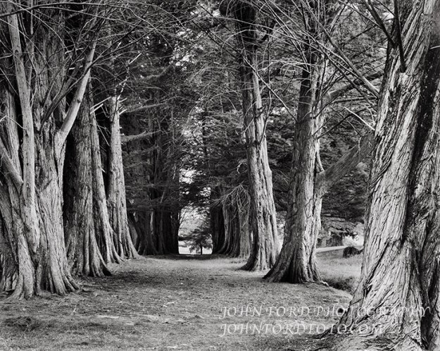 Trees at the penal colony at Port Arthur, Tasmania.