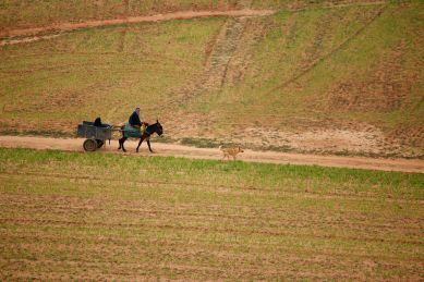 berber horse cart dog
