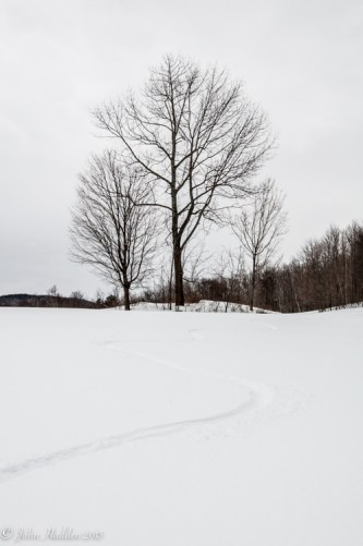 Graceful turns below bare maples off of Taft Road