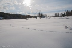 A coyote's track across the snow in the fields above our house