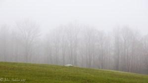 Morning fog wraps the late fall trees along Taft Road.