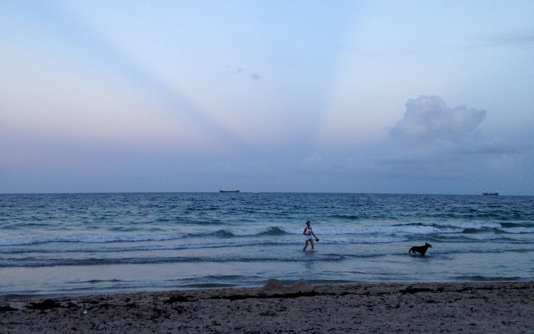 Miracle Dog & the Florida Sky