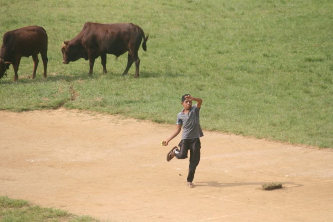 A pickup cricket game in Haputale with cattle on the playing field. Cricket is the national sport in Sri Lanka.