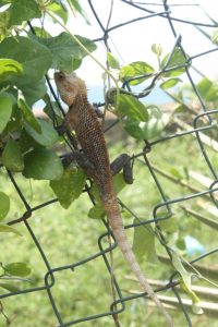 I visited the Fort in heat only a lizard could love.