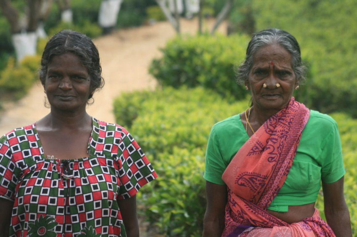 Lipton's tea plantation employs about 400 tea pickers, mostly Tamils originally from South India.