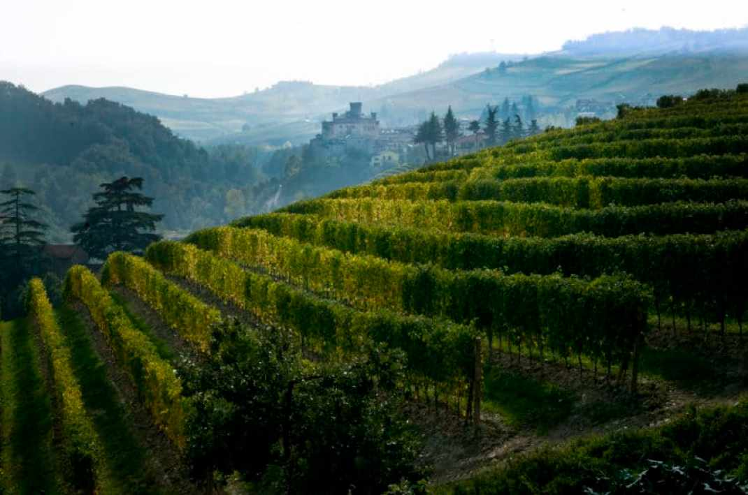 A vineyard in the Langhe region of Piedmont in Northern Italy. Photo by Marina Pascucci