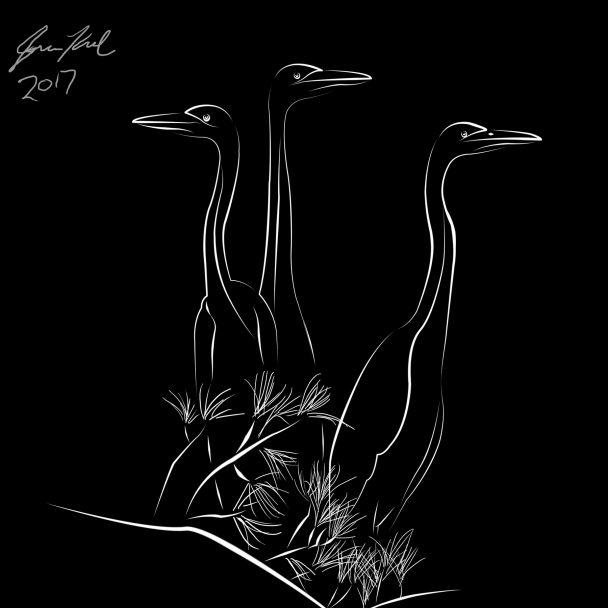 Line drawing of three herons