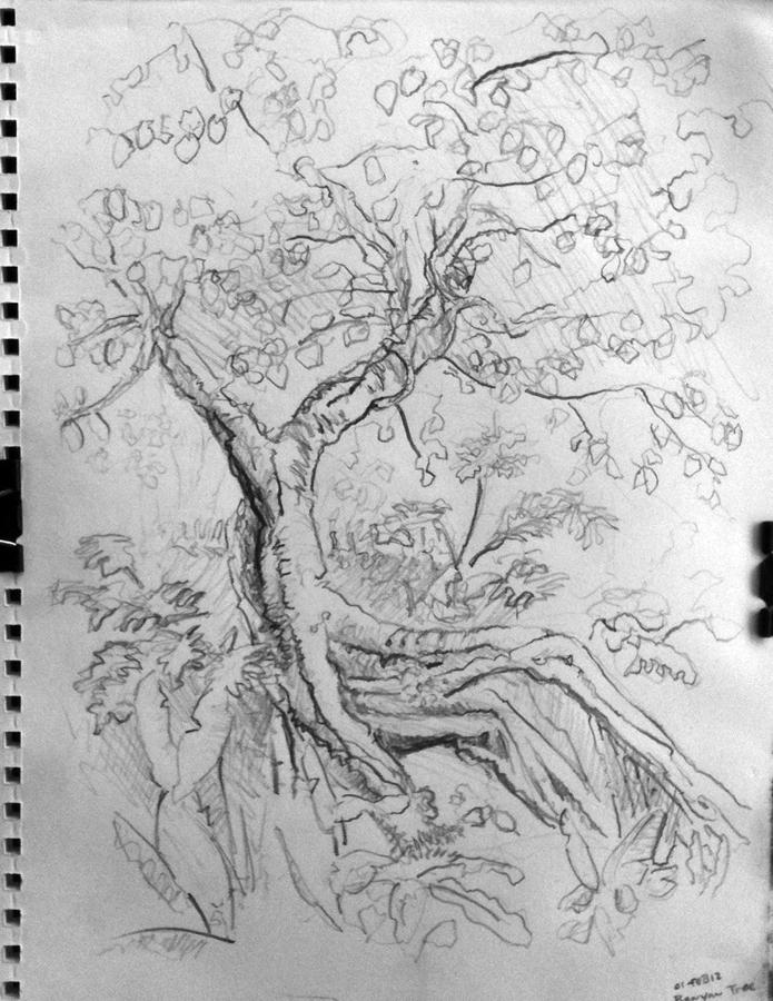 02-01-12-banyan-tree