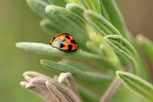 Closeup photo of beetle in blade of grass