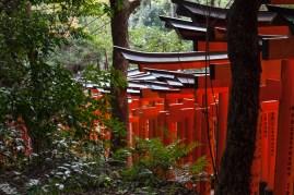 Fushimi Inari - the track down (pic 1) (IMG_7858)