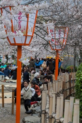 After work hanami - pic 2