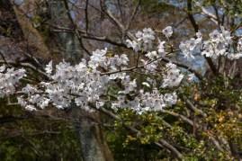Splendid White Blossoms