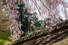 Ryoanji - the other side of the wall
