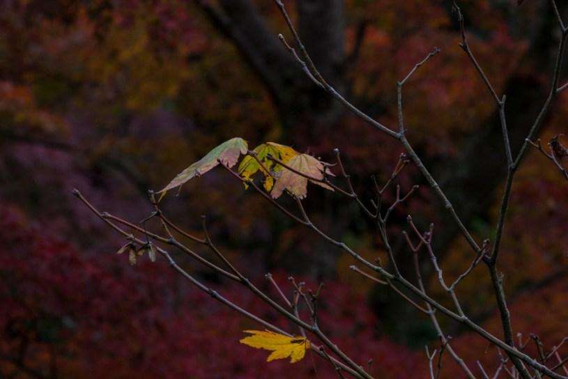 Farewell to Autumn