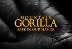 Mountain Gorilla: Safe in Our Hands [3/3]