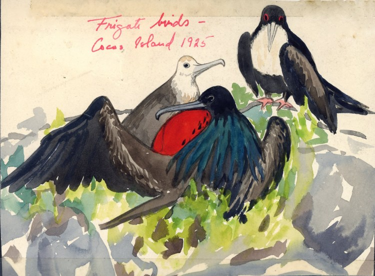 ICM Frigate Birds Cocos 1925