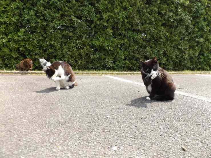 straycatstalkabout.jpg