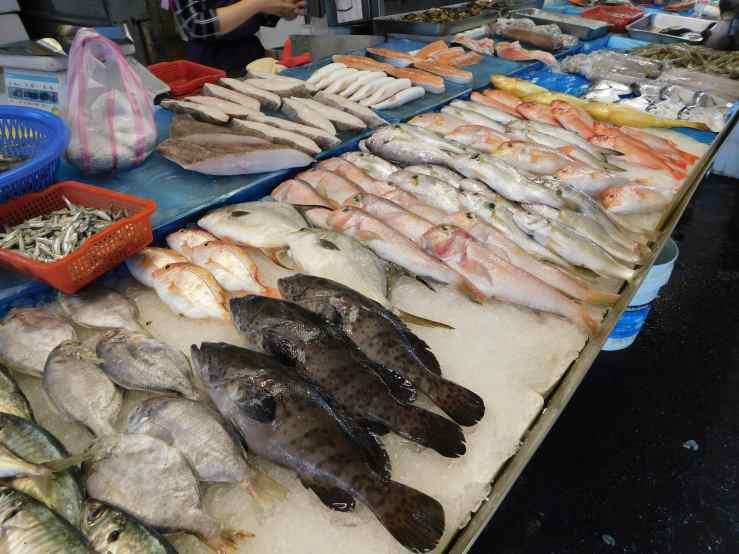 fish corner photo
