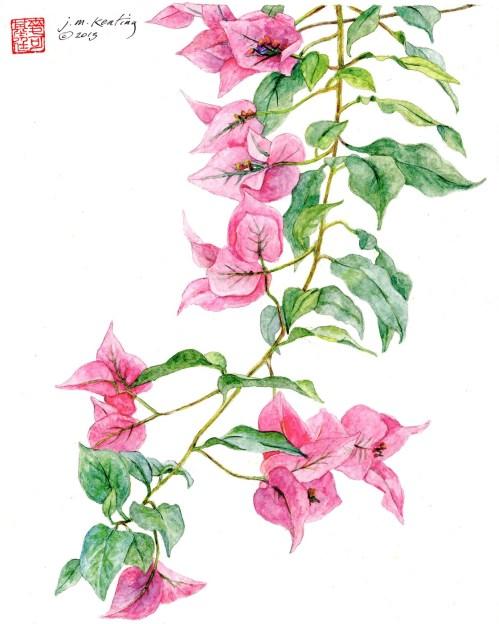 Bougainvillea - Watercolor - 11 x 14 inches